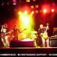 Hammerhead 2006